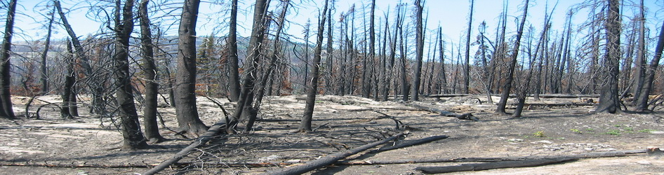 images/slider/Forest_fire_aftermath.jpg