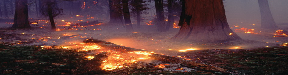 images/slider/sequoia-forest-fire-505503-sw.jpg